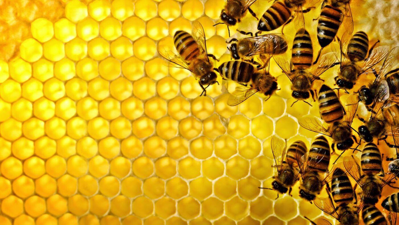 cách sử dụn sữa ong chúa