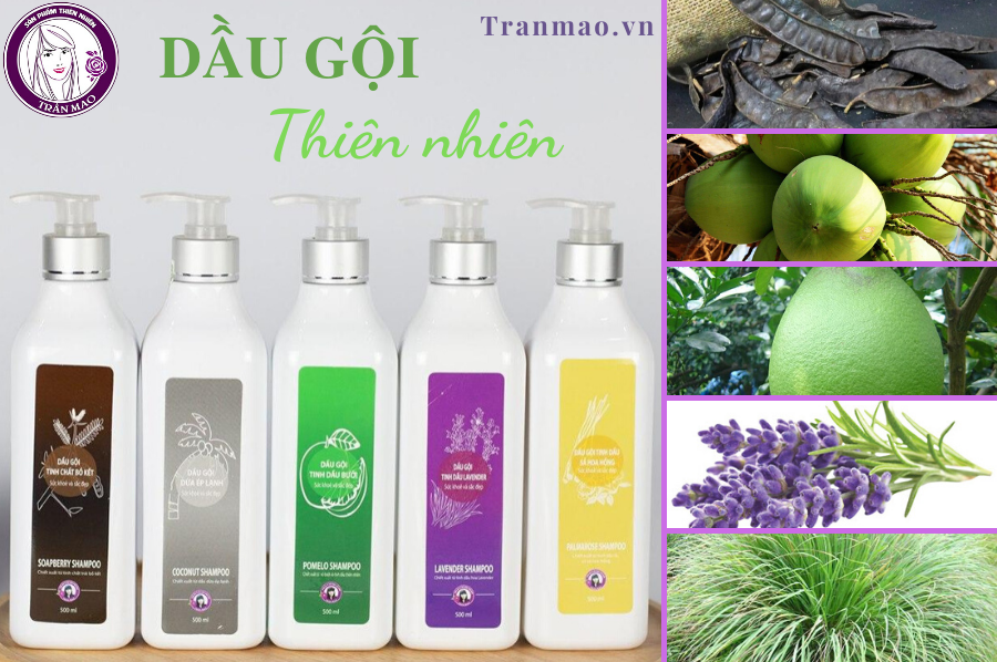 Dầu gội tinh dầu lavender