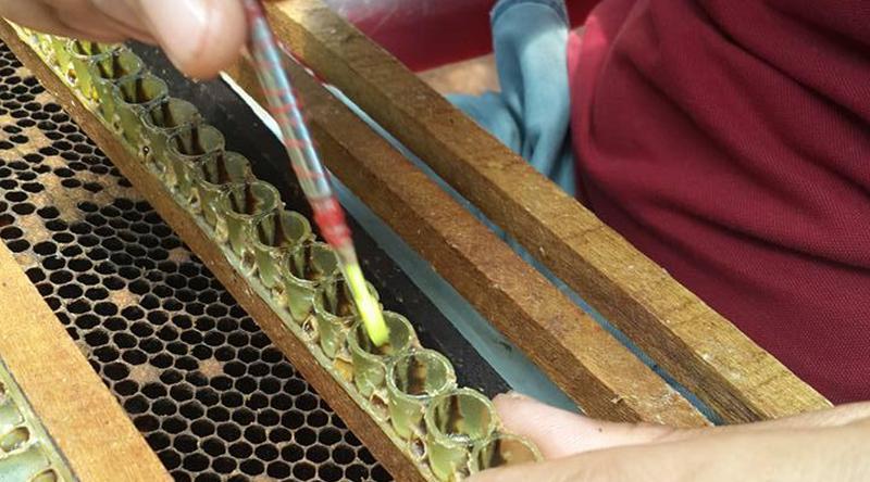 những điều thú vị mật ong rừng