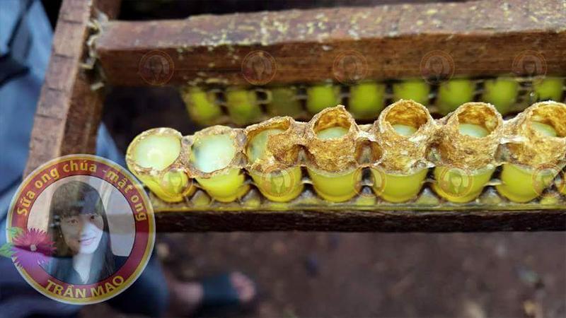 sữa-ong-chúa-giàu-dinh-dưỡng