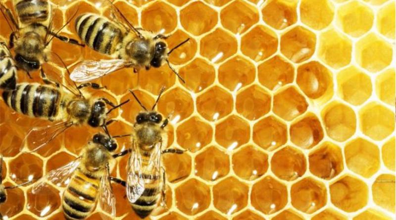 tác-dụng-mật-ong-rừng