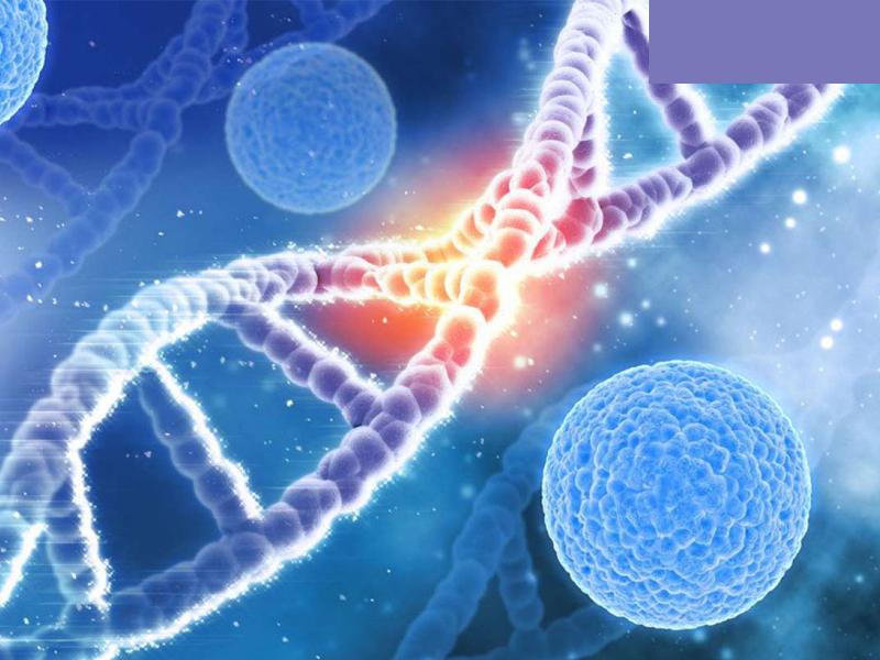 Tế bào hoạt động tốt nhờ Tinh Dầu Lavender