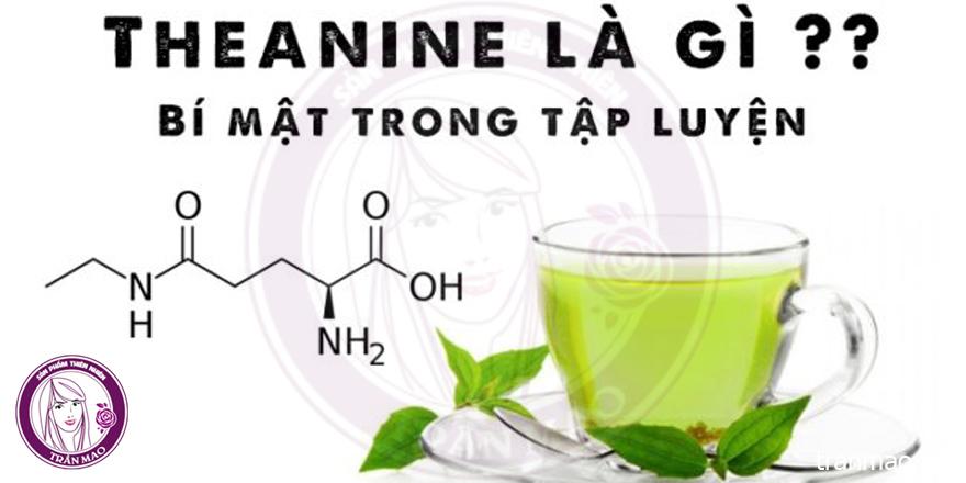 Chất theanine đối với sức khỏe