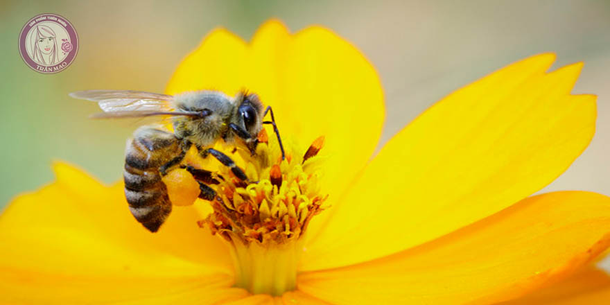 Cách nhận biết mật ong rừng